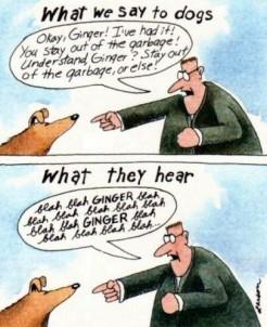 gary-larson-far-side-cartoon-what-we-say-to-dogs-blah-blah-ginger